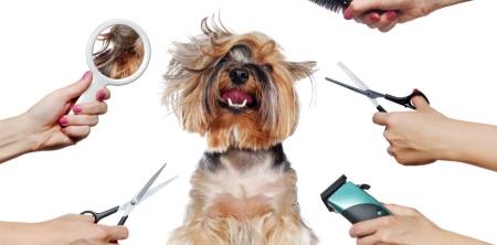 Biaya Grooming Anjing